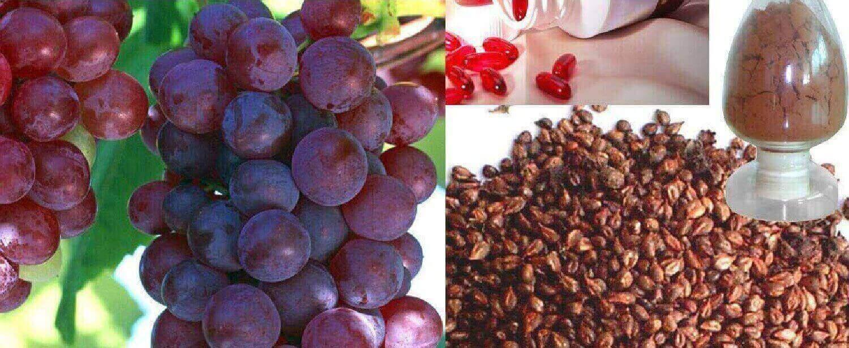 7 benefícios para a saúde de sementes de uva