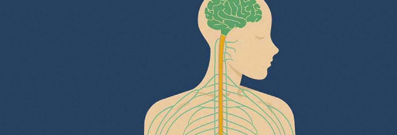 lista de 12 nervos cranianos e suas funções