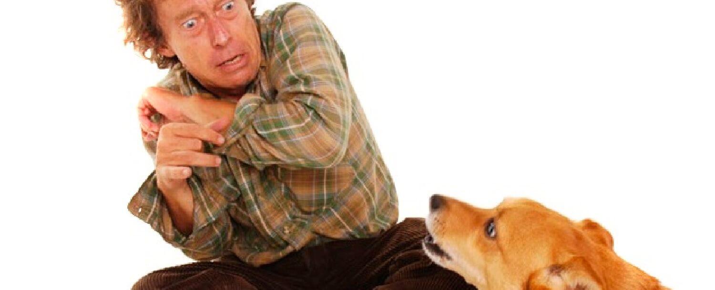o que é cynophobia ou medo de cães e como é tratado