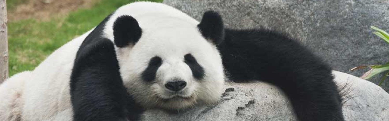 o que é pandas
