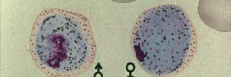 qual é o ciclo de vida da malária