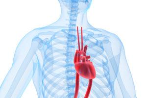 As válvulas de porco ainda são usadas em corações humanos