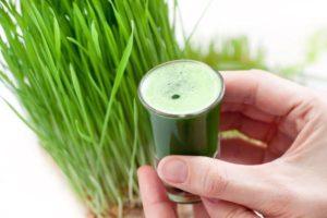 Benefícios e efeitos colaterais do Wheatgrass e seu uso