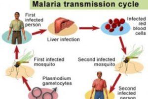 Como é transmitida a malária