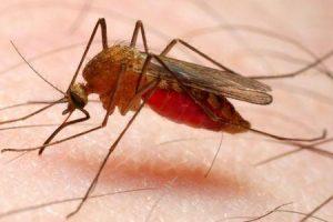 Por que há tanta malária na África