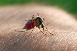 Quais são os diferentes tipos de malária?