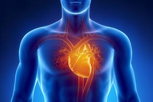 Quanto tempo demora para se recuperar da cirurgia de substituição da válvula cardíaca?