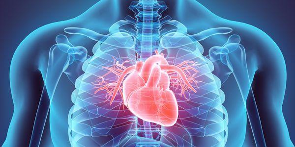 Quanto tempo dura uma válvula de coração de porcos em um humano