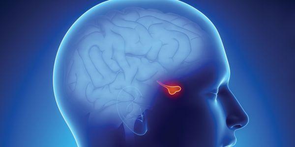 addisons doença ou hipocortisolismo ou hipoadrenalismo