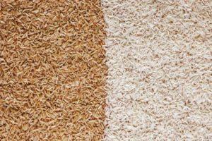 arroz integral vs diferenças de arroz branco vale a pena conhecer