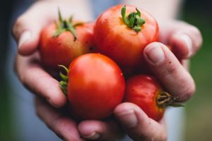 benefícios cardiovasculares de tomates