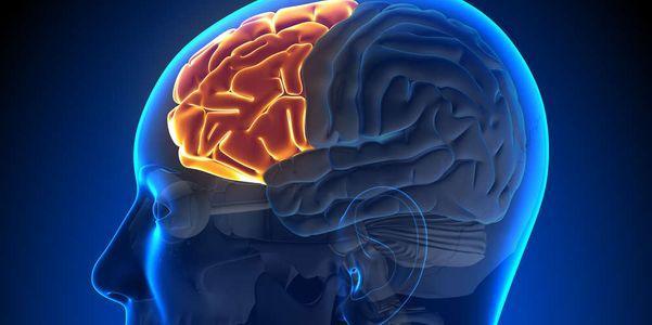 cérebro comendo ameba ou naegleríase