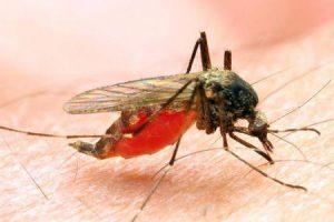 como a malária pode te matar