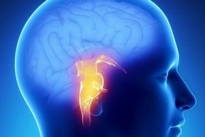 curso do tronco cerebral