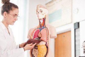 esteatose do fígado