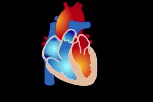 fibrilação atrial vs diferenças fibrilação ventricular vale a pena conhecer