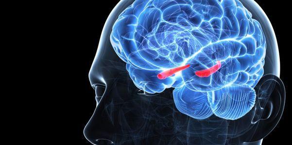 função do hipocampo o que acontece se o hipocampo é danificado