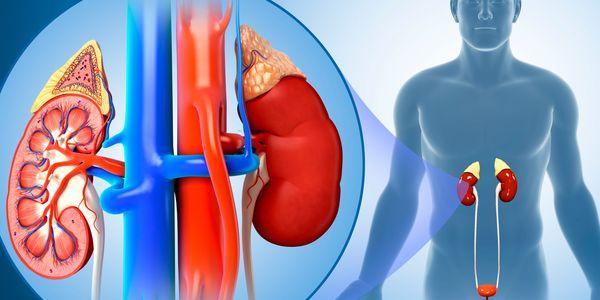 infecção renal ou pielonefrite