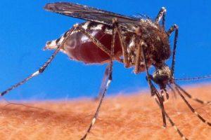 linfadenopatia da dengue