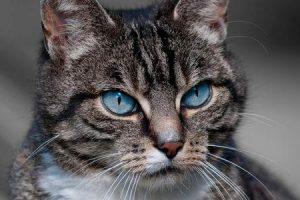 o que é ailurophobia ou medo de gatos