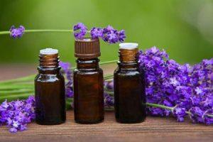 os efeitos colaterais dos óleos essenciais de eucalipto e lavanda