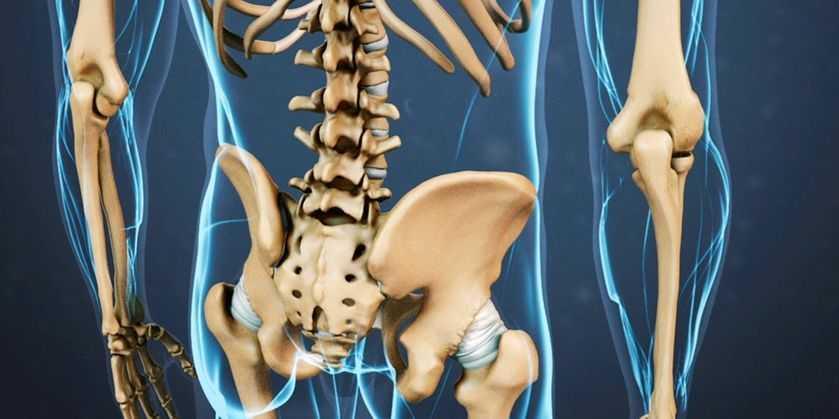quais ossos e articulações suportam o peso do corpo