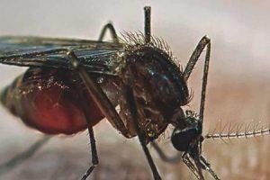quais países têm malária