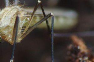 a malária pode ser tratada com antibióticos