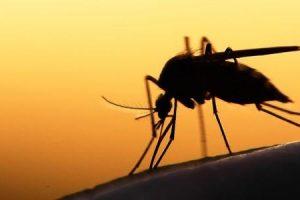 a malária uma doença evitável