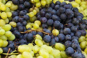 diabéticos podem comer uvas