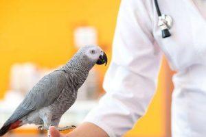 febre papagaio ou psitacose