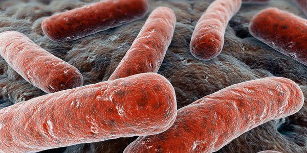 micobactéria não tuberculosa