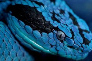 ofidiofobia ou medo de cobras