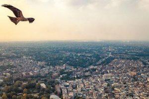 ornitofobia ou medo de pássaros