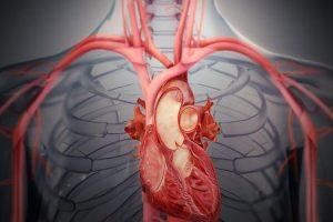 qual é a expectativa de vida da válvula cardíaca que vaza