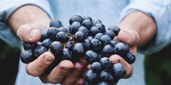 uvas para a síndrome do intestino irritável