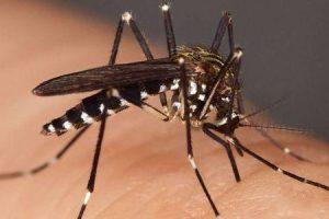 você pode curar a malária
